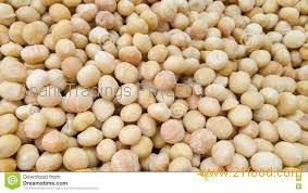 17-20mm Macadamia Nuts for sale
