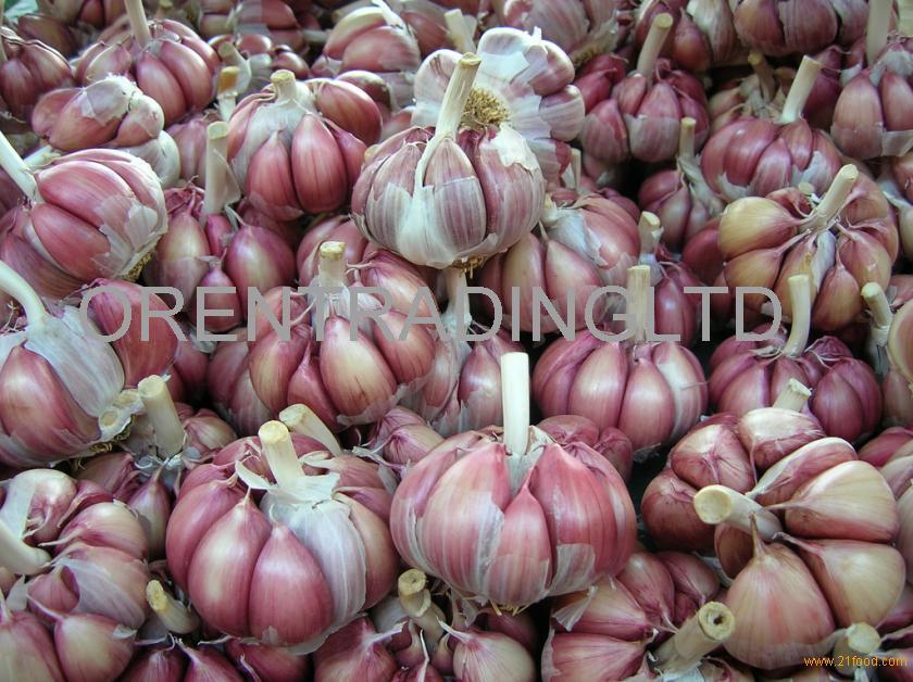 Fresh New Garlic Natural Garlic Chinese Garlic Wholesale