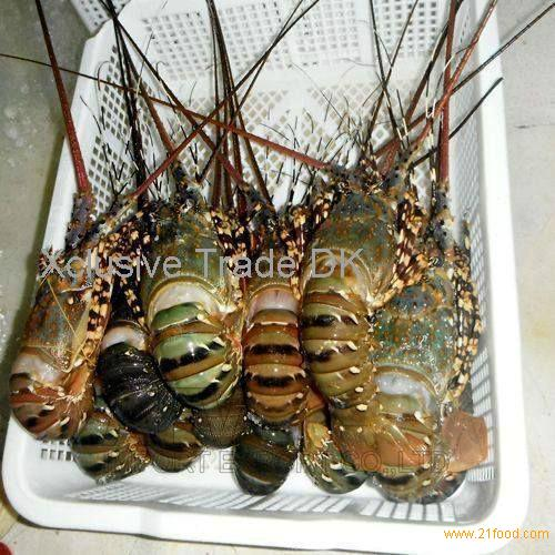 Whole Fresh live Lobsters and frozen lobsters,Live Canadian Lobsters,Whole Frozen Raw Lobster and Ta