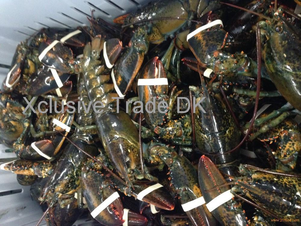 Frozen Pink Lobsters , Frozen White Lobsters , Frozen Raw Lobsters , Canadian Lobsters , Live Raw
