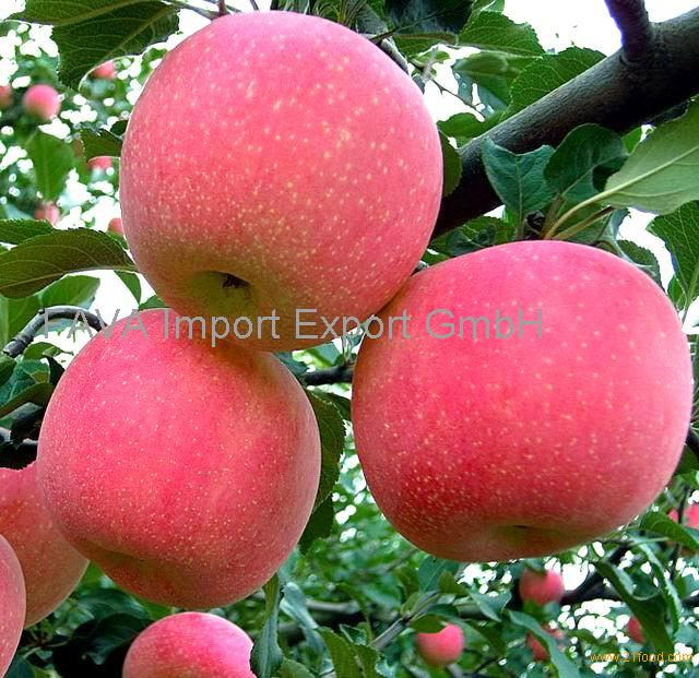 Fresh style fruit