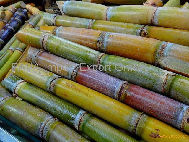Fresh Sugarcane sticks