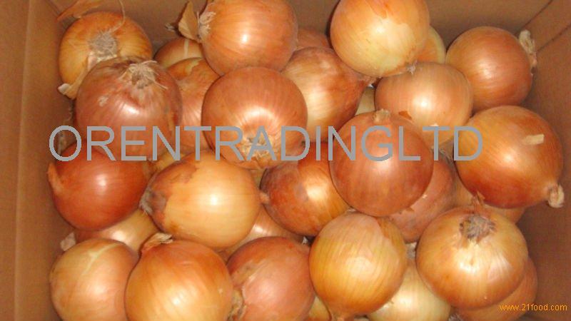 Grade A Fresh Onions