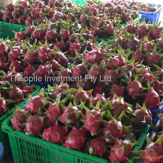 Fresh Dragon Fruit for Export