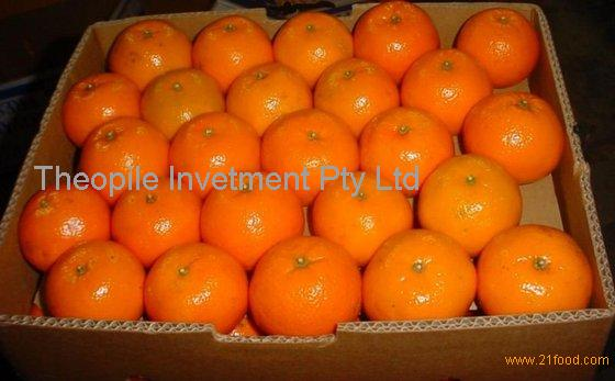 Fresh Fruits Mandarin Orange From South Africa