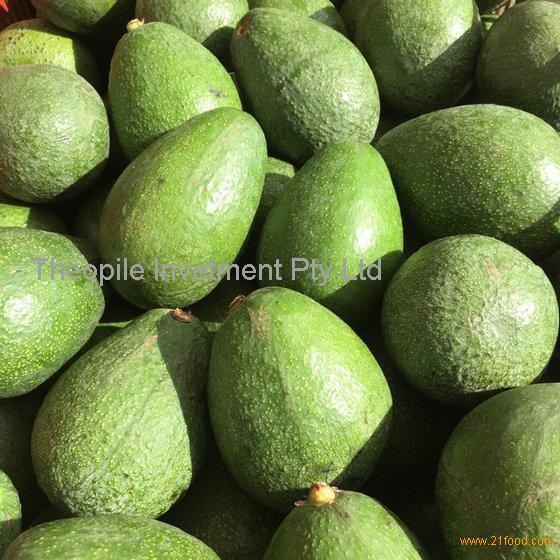 Fresh Hass and Fuerte Avocado