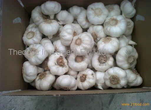 Fresh Pure White Garlic, Normal White Garlic, Peeled Garlic, Garlic Powder