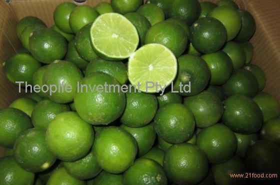 Fresh Green Lime Seedless