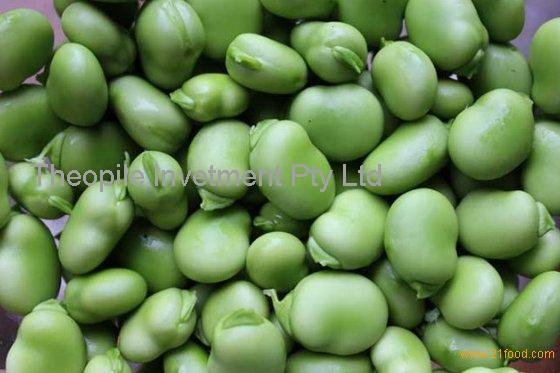Azuki Beans, Broad Beans, Faba Beans