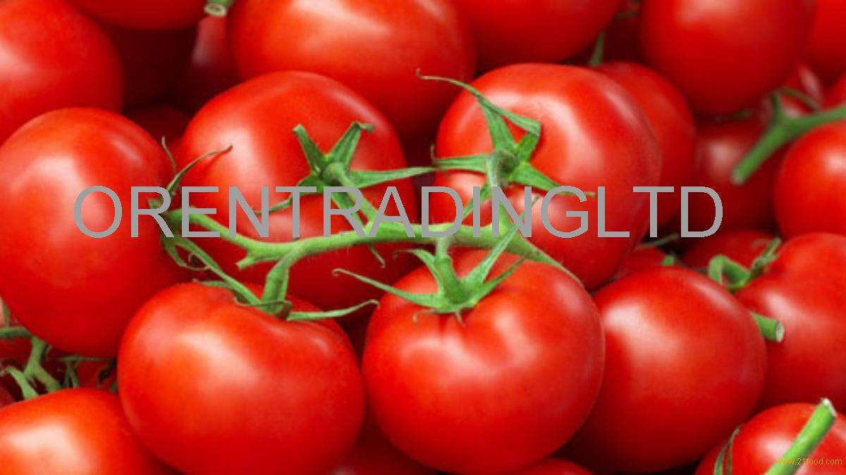 High Quality Grade A Fresh Tomatoes