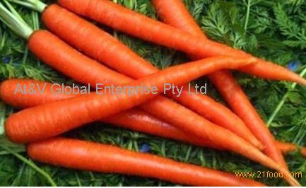 Good Quality Fresh Carrot (80-150g)
