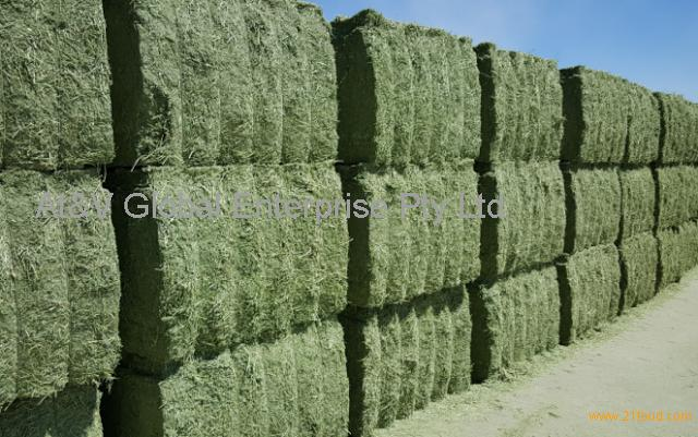 Alfafa hay and seeds