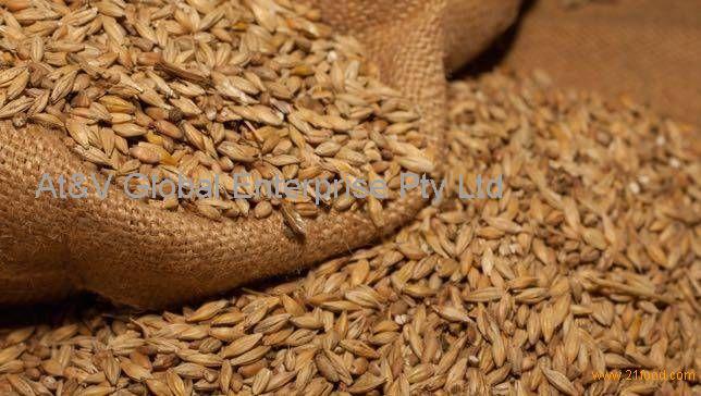 Barley (Malting & Feed Barley)