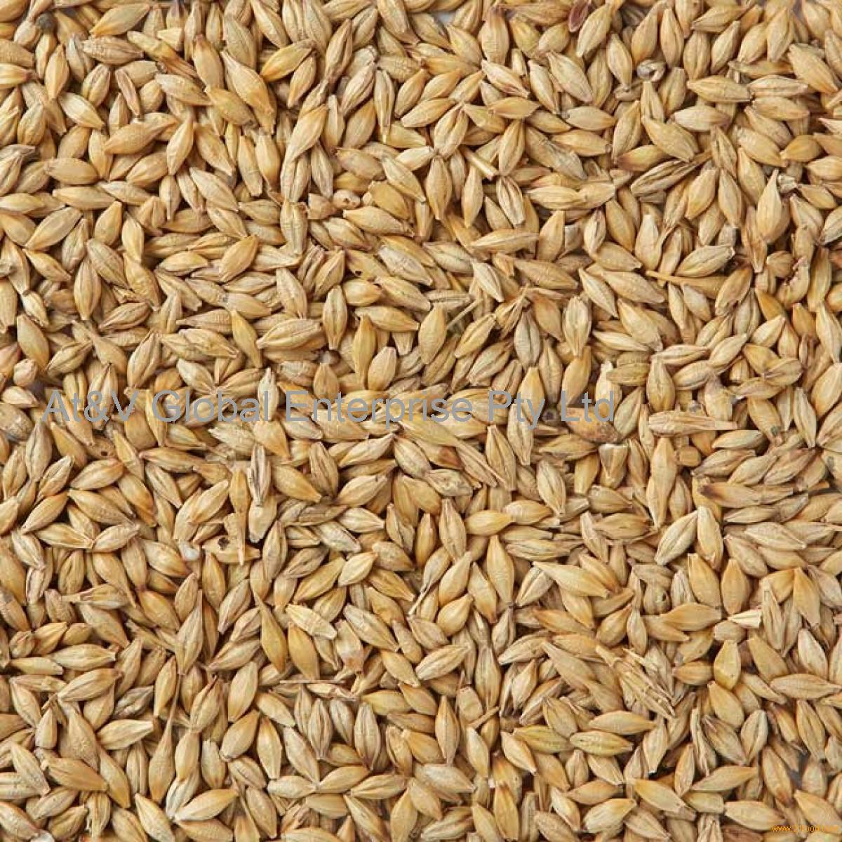 Wheat Grain & Wheat Flour
