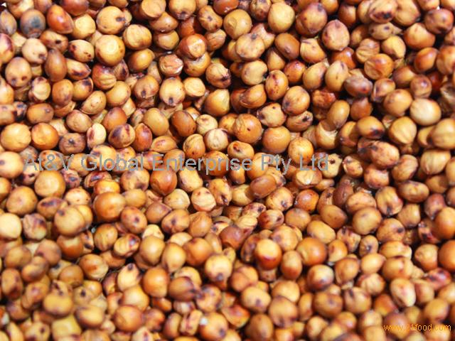 Sorghum (Human and Animal)