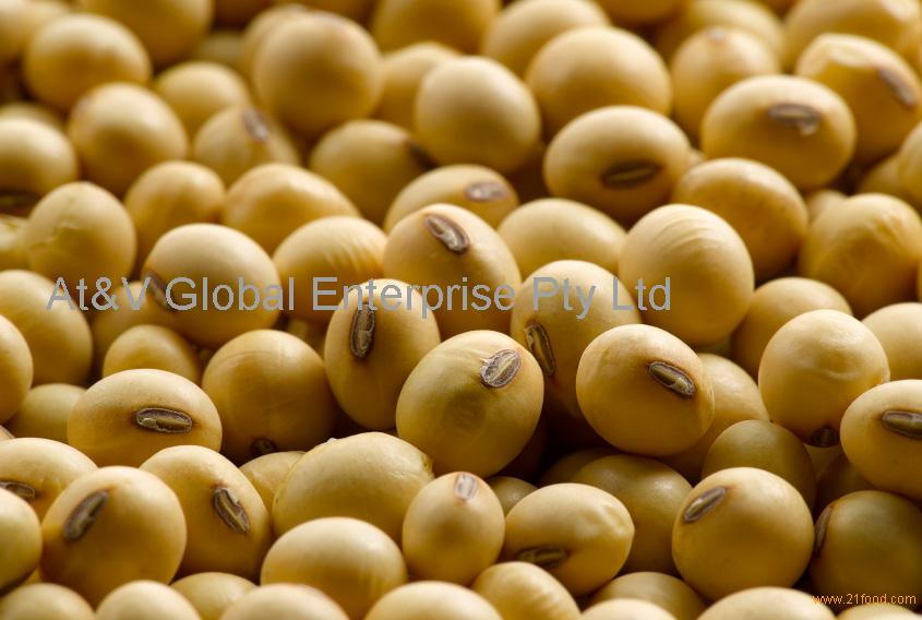 Non-GMO and GMO Soybean Seeds (Human And Animal Feed)