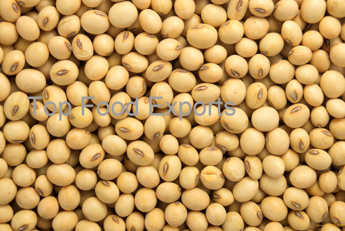 High Protein Soybean