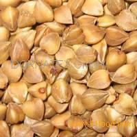 Roasted Buckwheat Kernels for sale