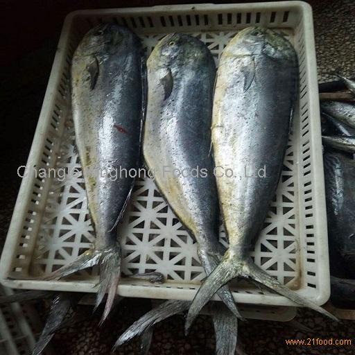 Frozen Mahi Fish