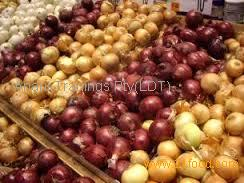Fresh Red/Yellow/White Onions