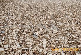 Best Price Dried Cassava / Tapioca Chips