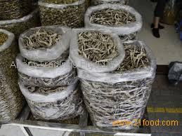 wholesale dried Sea horse