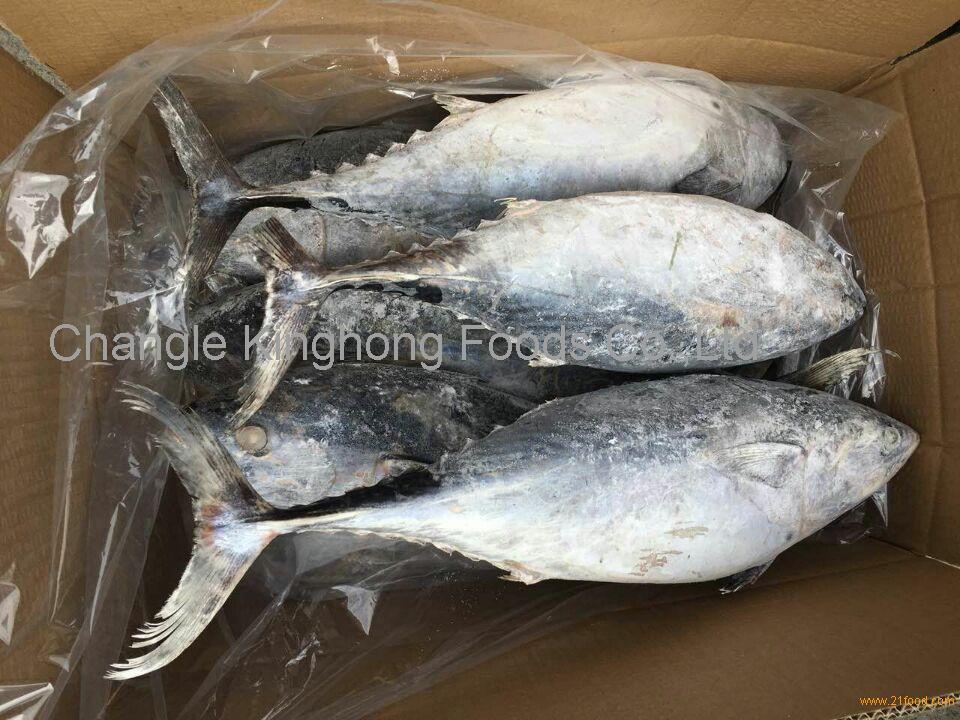 Frozen Bonito Fish WR