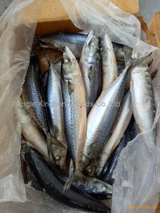 Pacific Mackerel Hot Sale