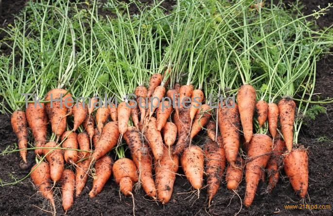 Fresh carrots, carrot, organic carrot, vegetables, fruits, spices, onions, tuber