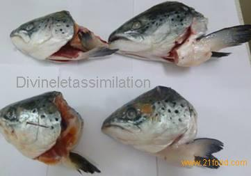 Frozen Atlantic Salmon Heads(V-cuts and straight cuts)