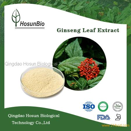 Ginseng leaf and stem extract ginsenoside UV 80% powder ginseng extract