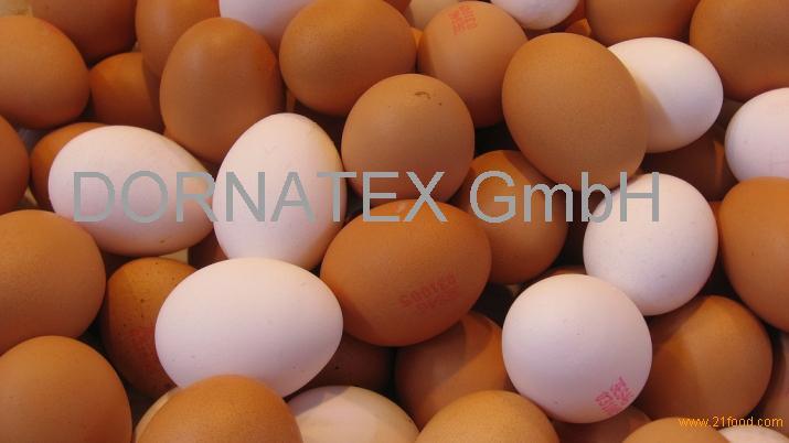 Namakkal Fresh White Egg Supplier In India