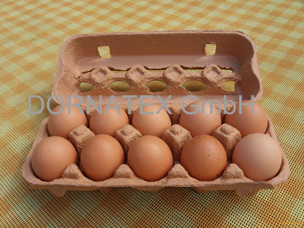 Grade A Fresh Chicken Table Eggs