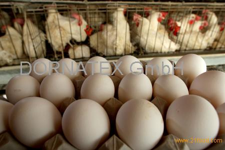 sell Fresh Brown Chicken Eggs from Thailand