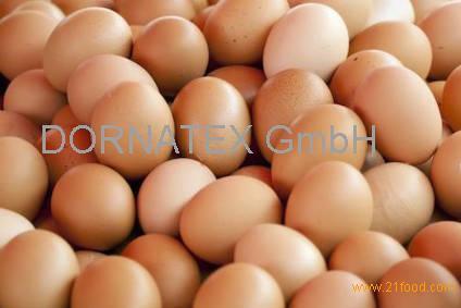 chicken egg.,///