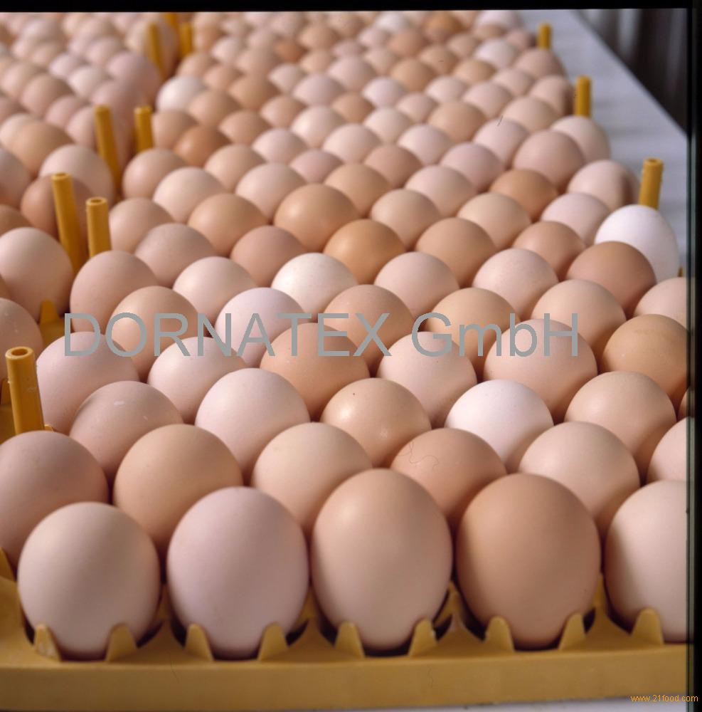 sell/Fresh .Table Eggs Brown And White.