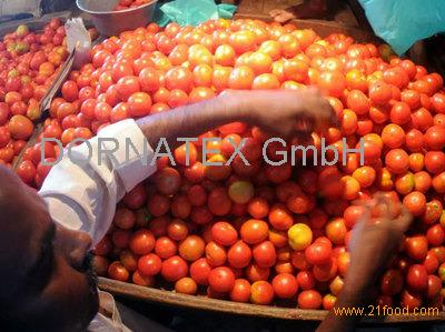 Grade A. Fresh Red Farm .Harvested Tomatoes .Best Export quality