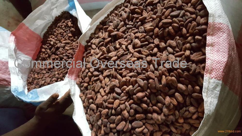 Premium grade Dried Raw COCOA BEAN Best Price