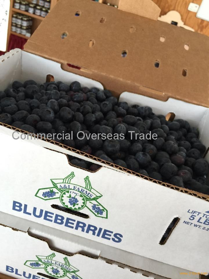 Buy quality grade Fresh Blueberries _ Blueberry best price