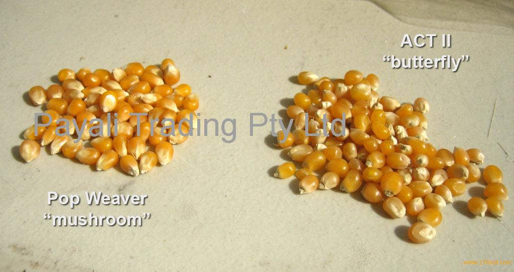Wholesale Top Quality Mushroom and Butterfly Pop Corn Seeds Kernels