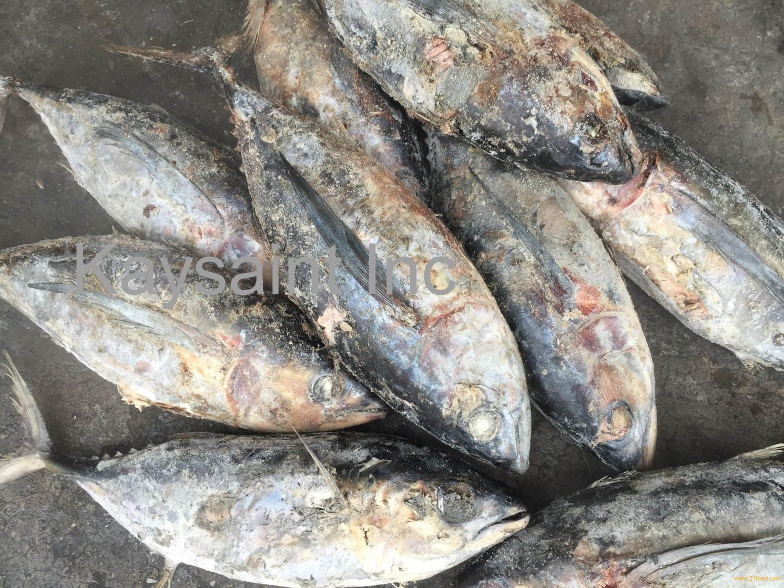 frozen big eye tuna