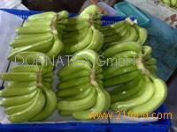 Fresh Cavendish Banana from South Africa