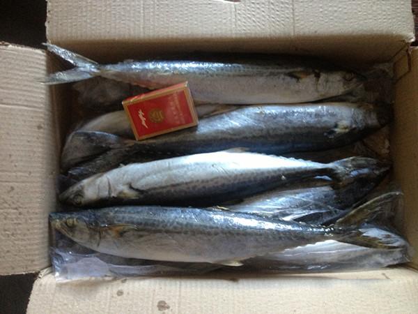 Frozen spanish mackerel 500-750g