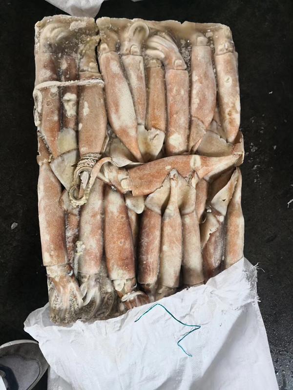 frozen squid WR 200-300g Tordarodes Pacificus