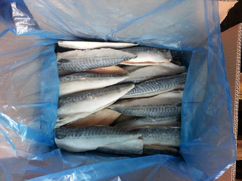 frozen Norway mackerel fillet