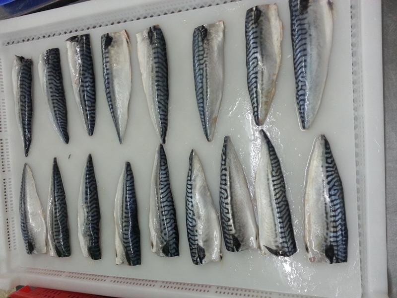 frozen atlantic mackerel fillet