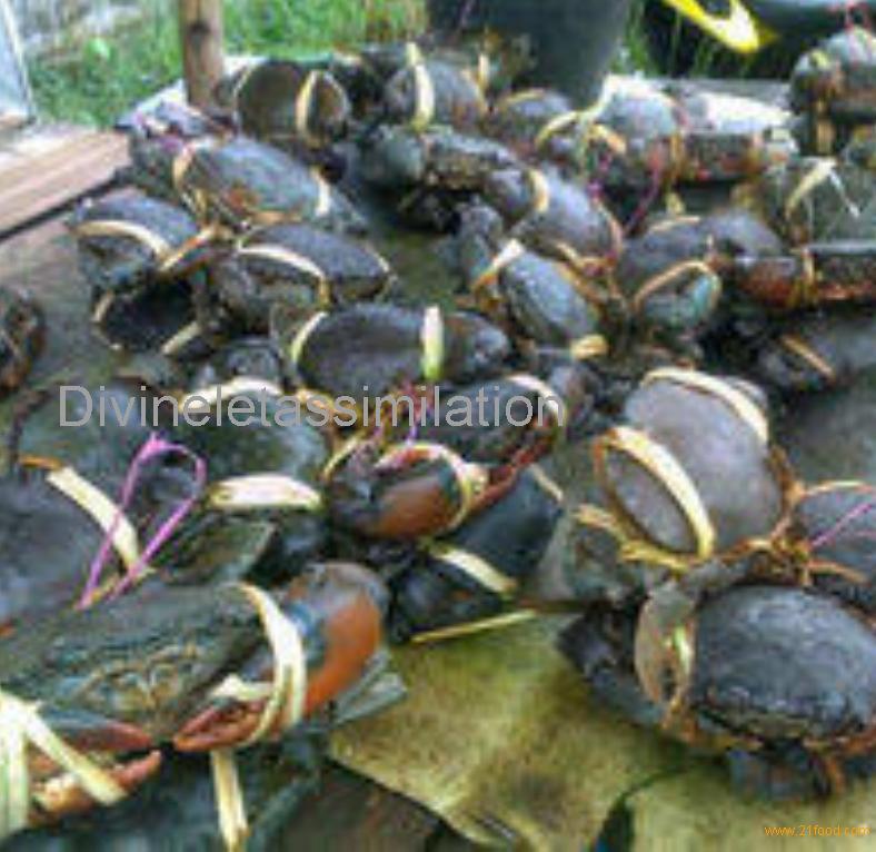 live green crab