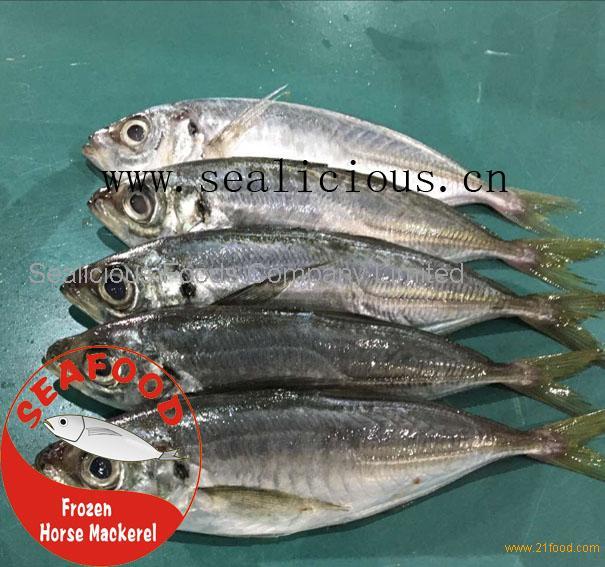frozen horse mackerel fish (jack/horse/pacific/atlantic)