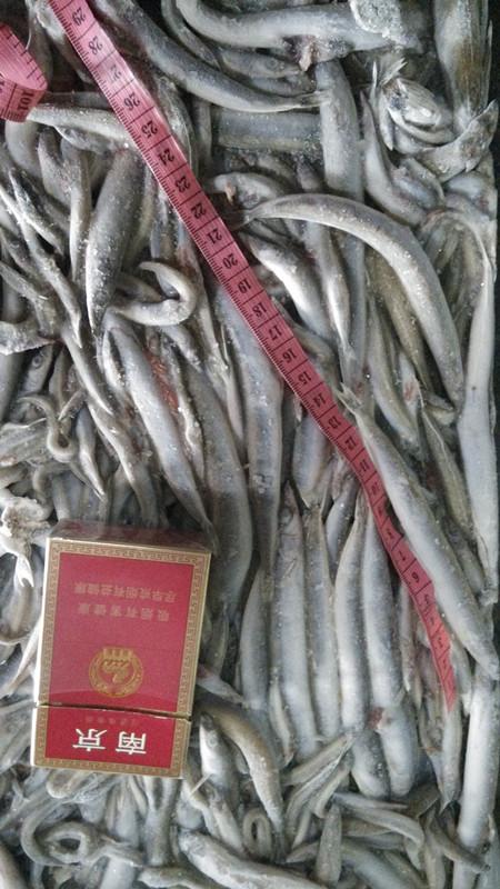 frozen sandlance whole feed fish