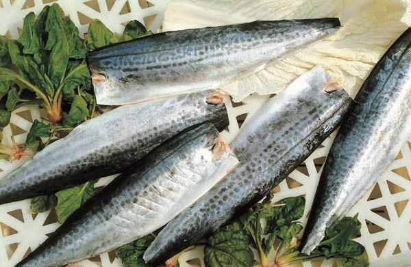 frozen spanish mackerel fillet